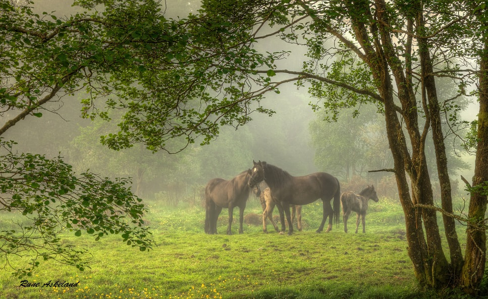 Photograph Misty morning by Rune Askeland on 500px
