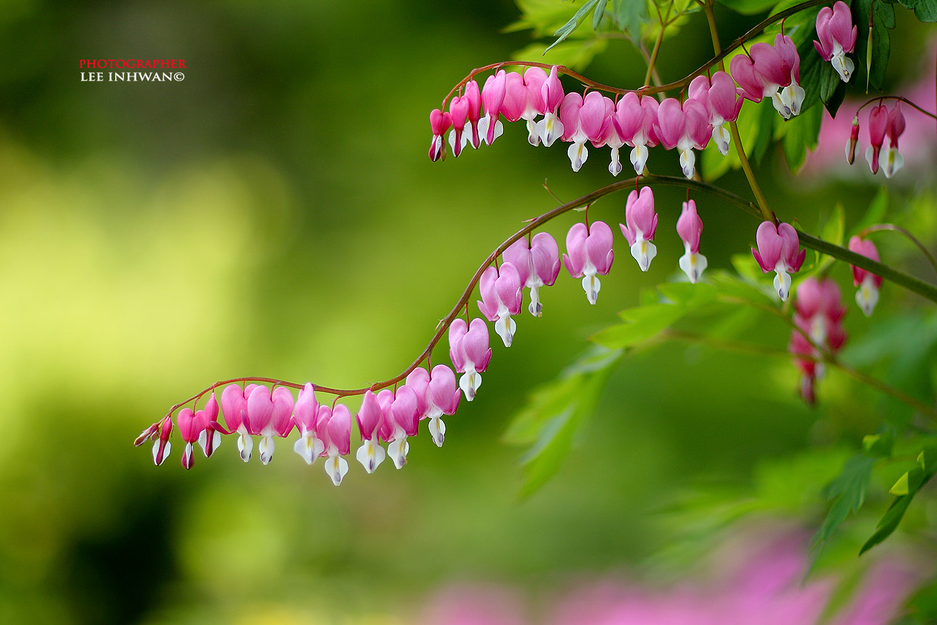 Photograph My best hearts by LEE INHWAN on 500px