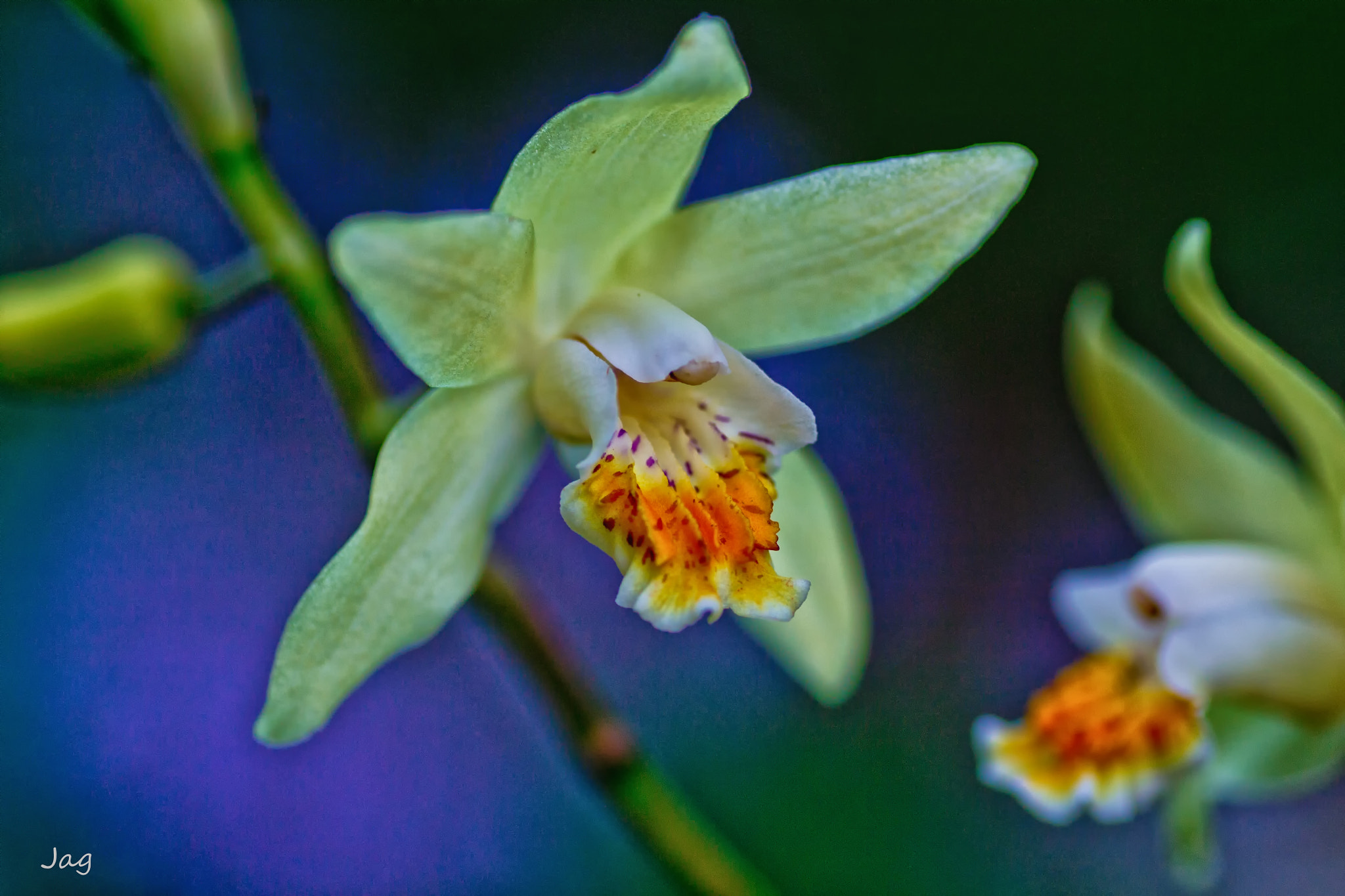Photograph Hardy Yellow Orchid by James Gramm on 500px