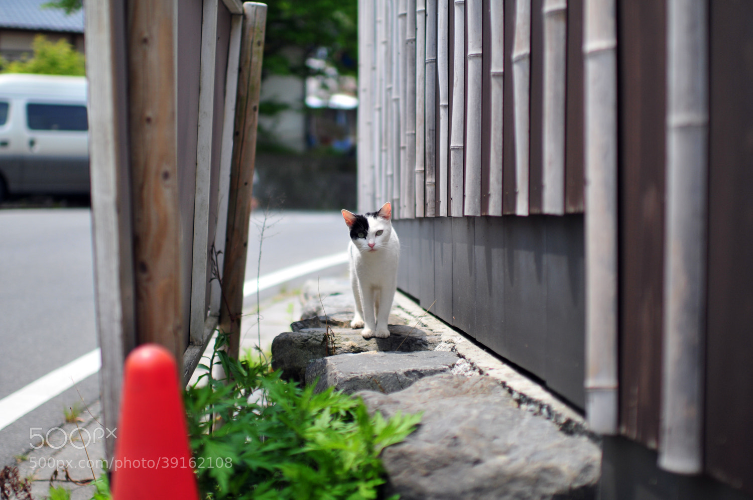 Photograph Hello! by Hiro _R on 500px