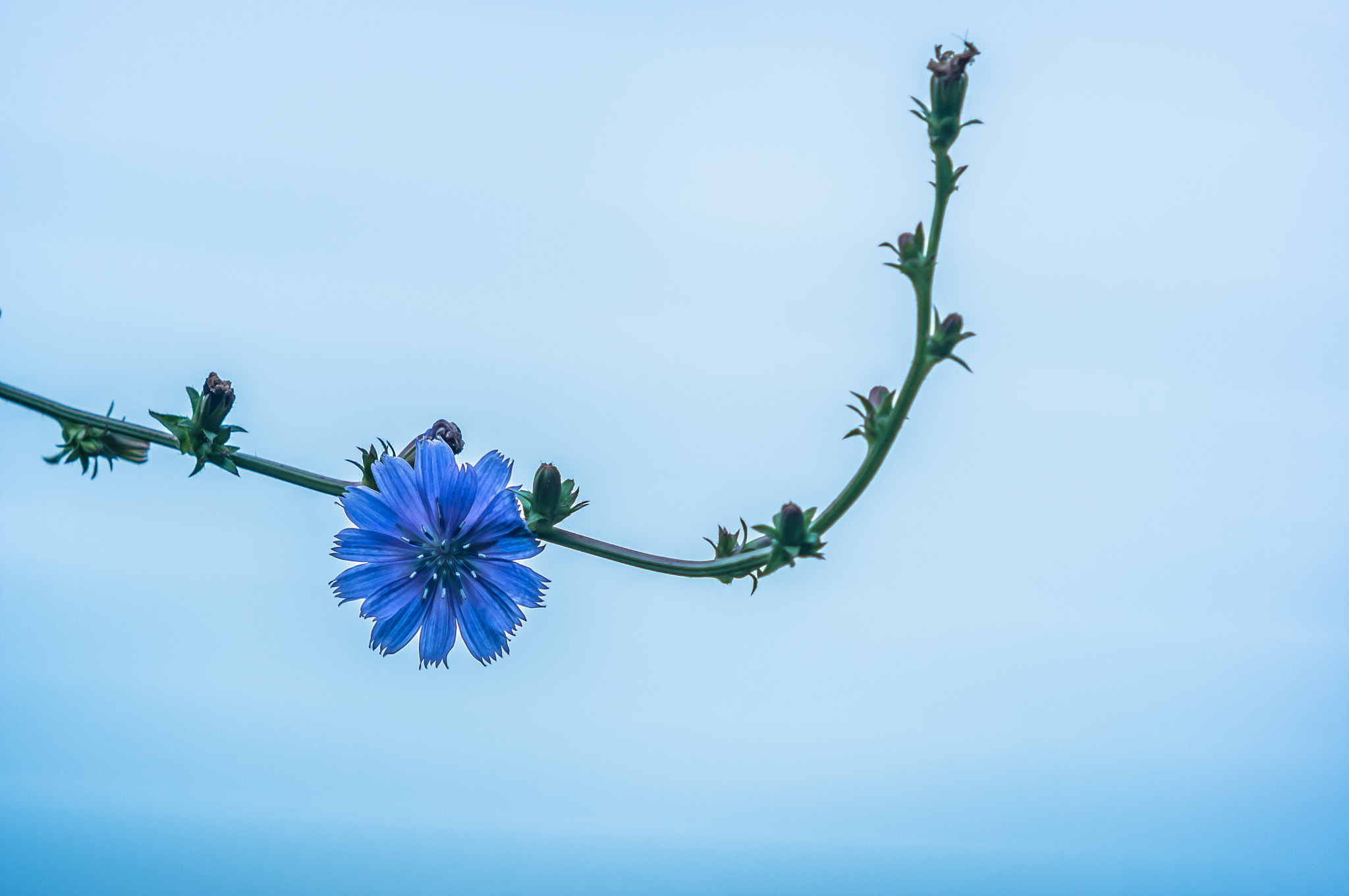 Photograph BLUE BLUE by lilla My on 500px