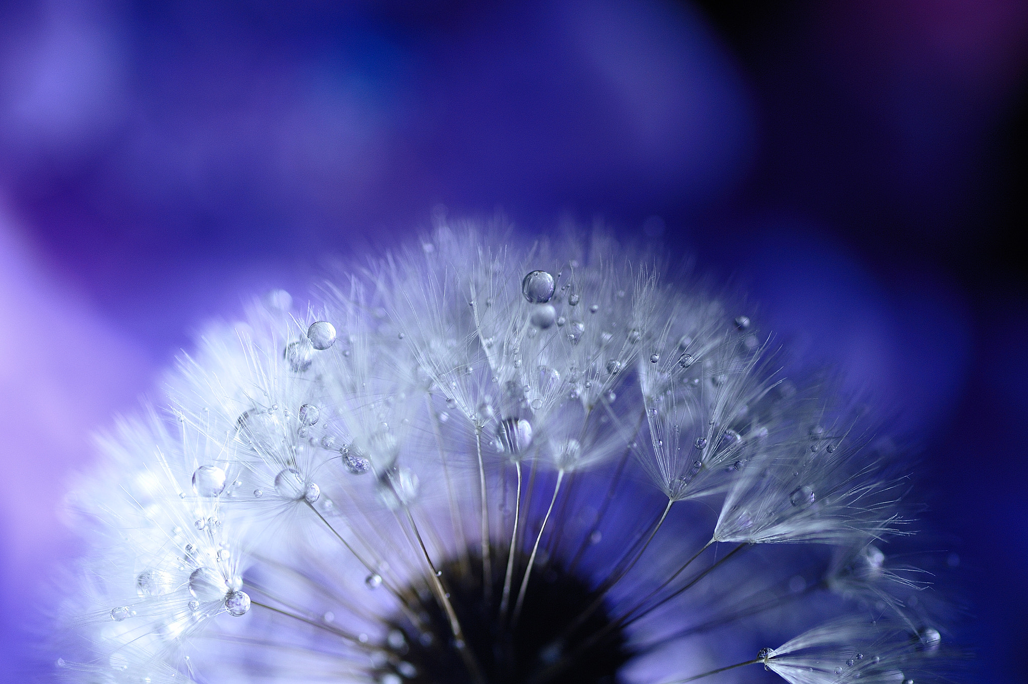 Photograph Some day,Skyward  by Lafugue Logos   on 500px