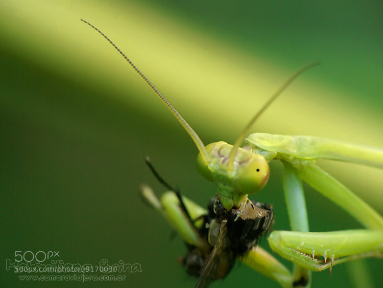 Photograph Lunch time by Maximiliano Brina on 500px