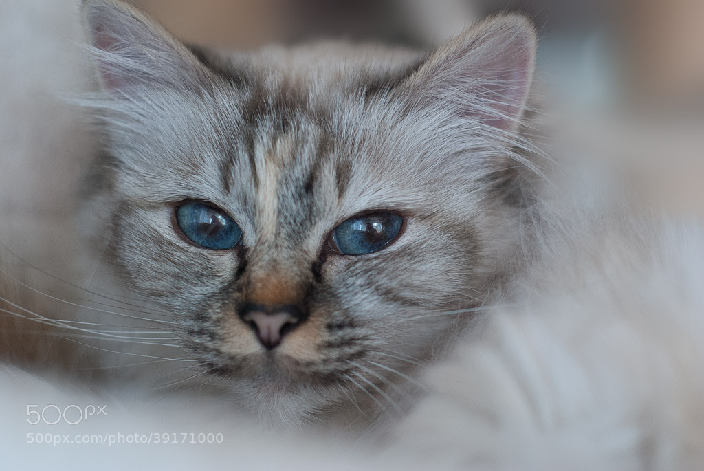 Photograph Untitled by White Cat on 500px