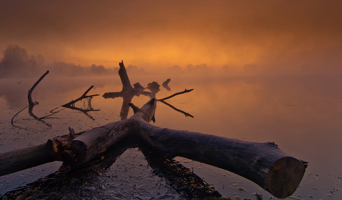 Photograph Story From The Swamp by Philip Peynerdjiev on 500px