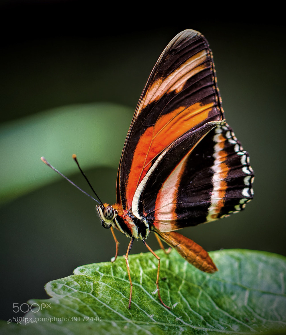 Photograph Stripes by Wim Bolsens on 500px