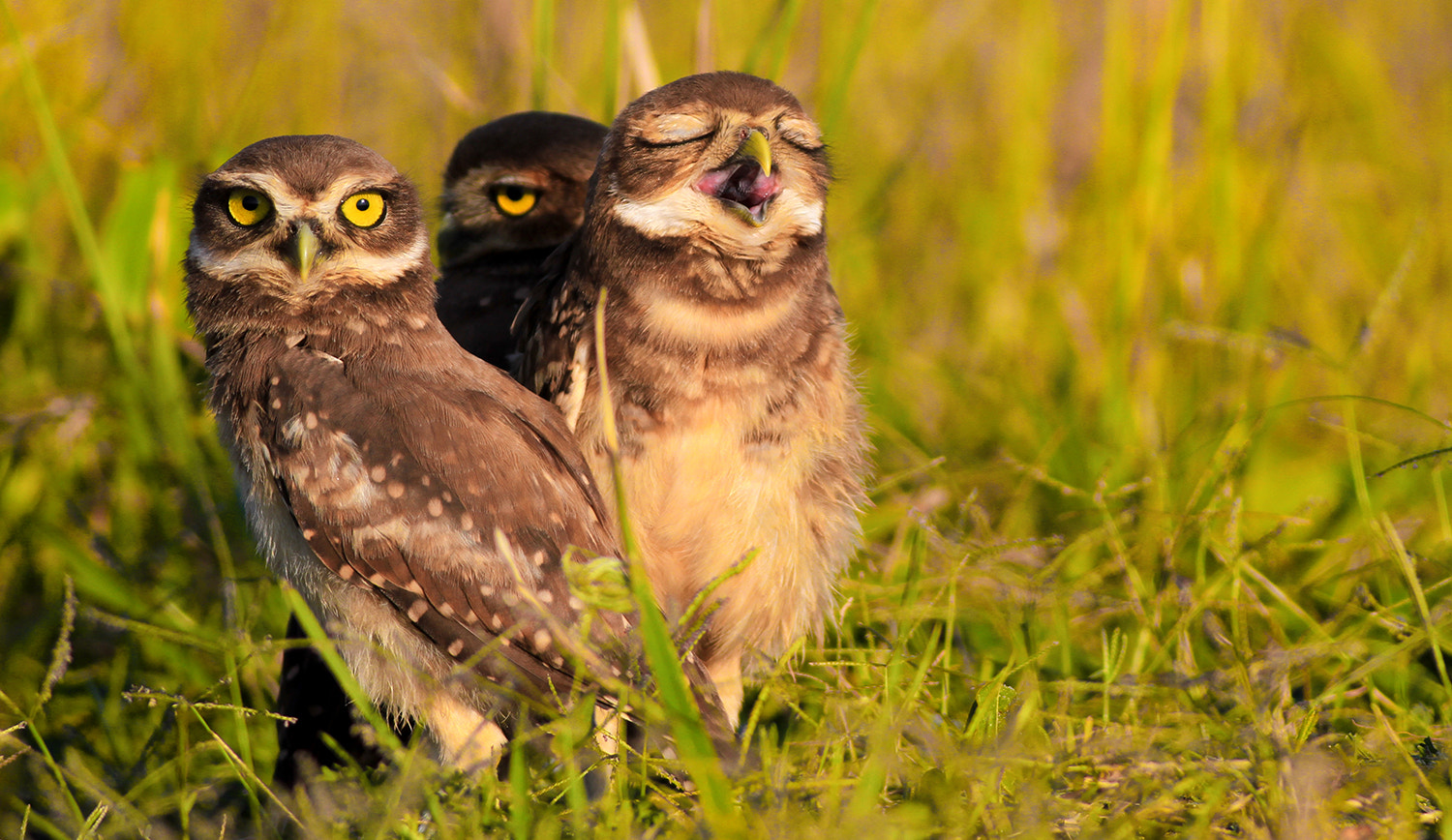 Photograph Sleepless night! by Itamar Campos on 500px