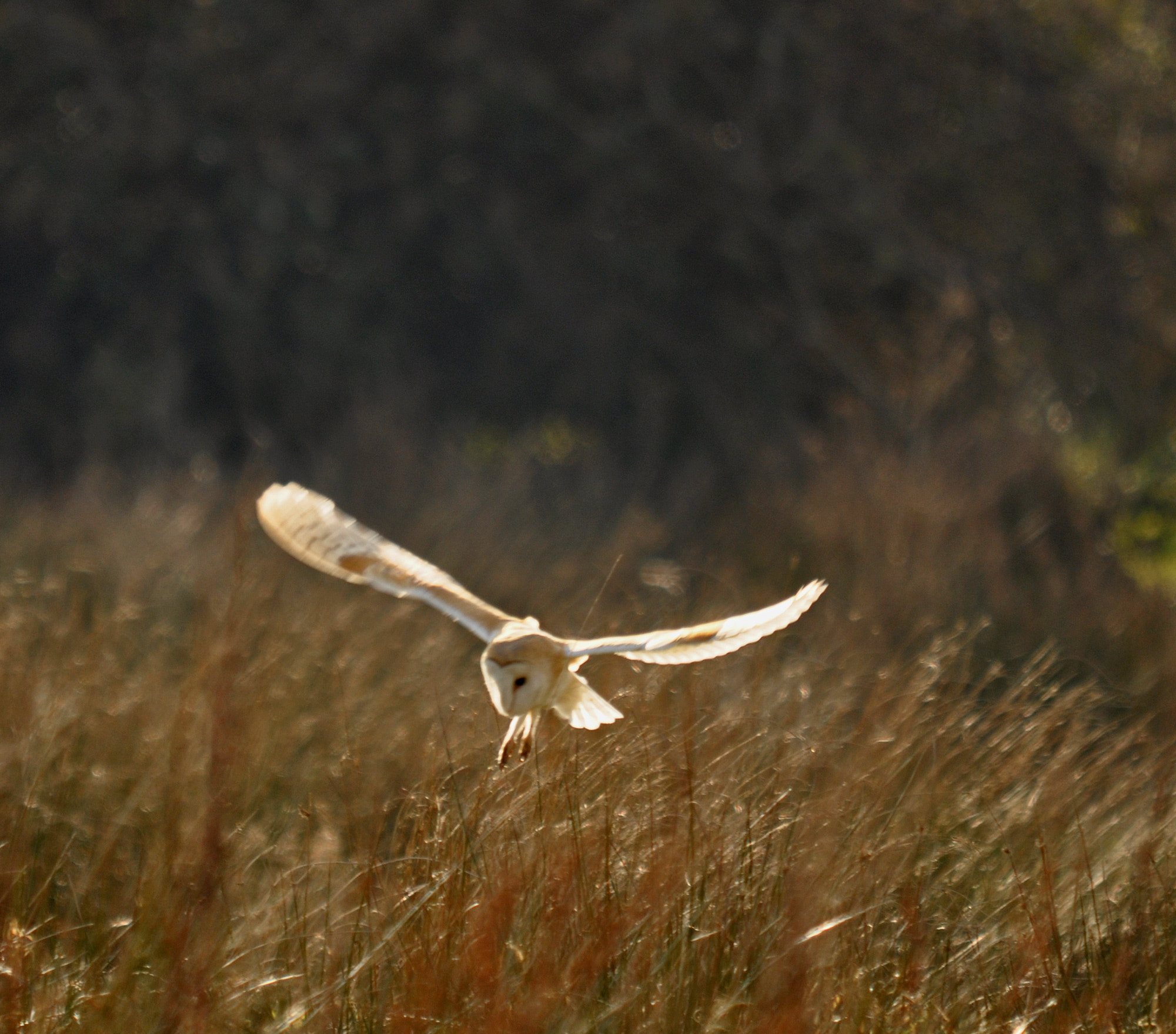 Photograph Barn Owl. by Graham Turner on 500px