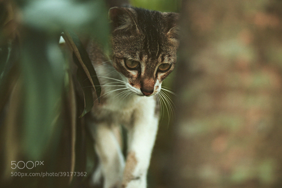 My Kitty by Nazrin Shah (NazrinShah)) on 500px.com