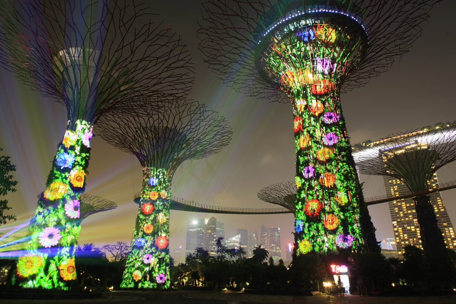 Mystical SuperTrees