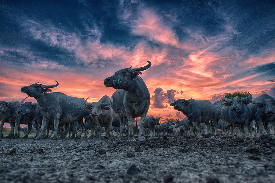 Photograph Ignore by virat tee on 500px
