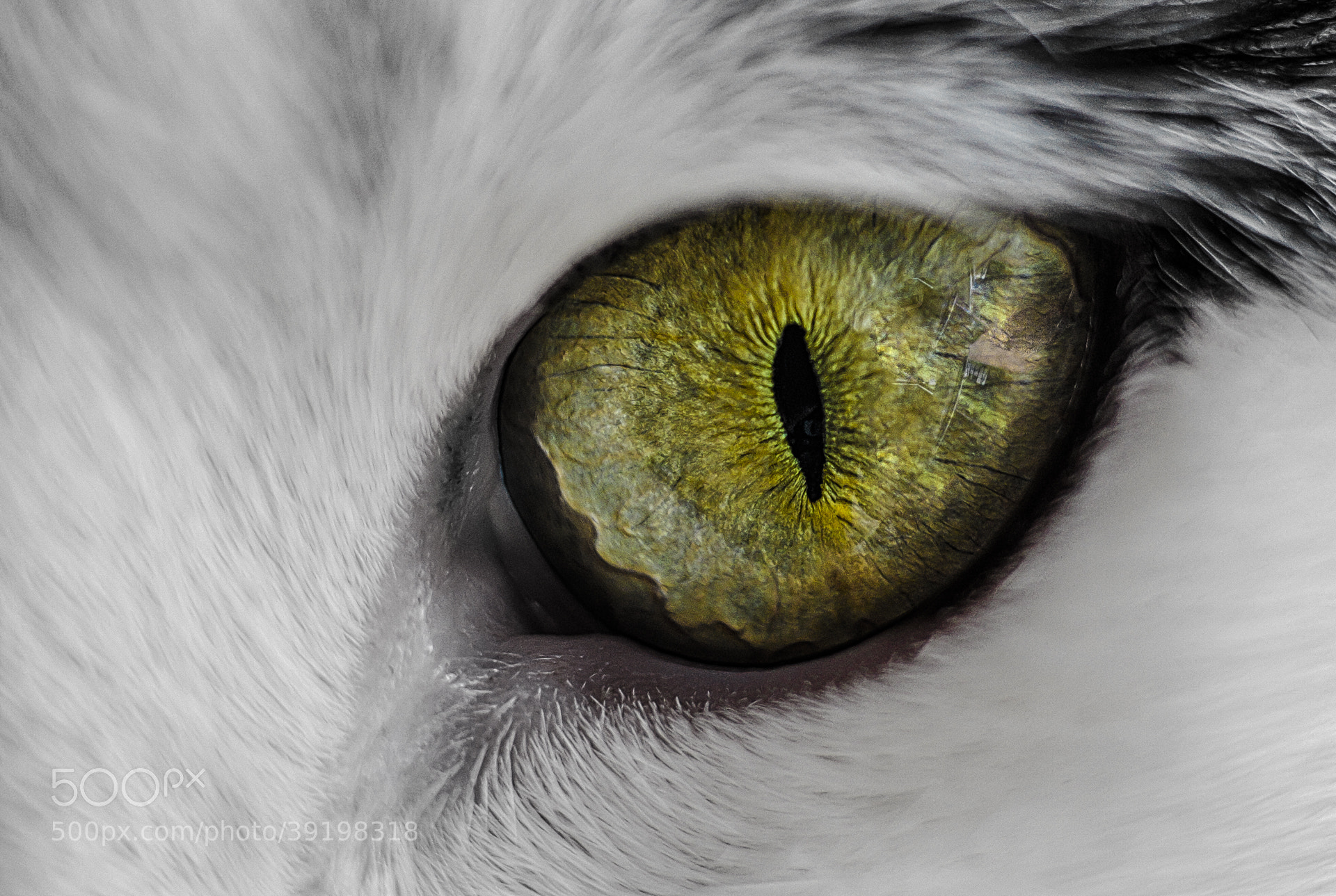 Photograph The Eye II by Phillip Plomer on 500px