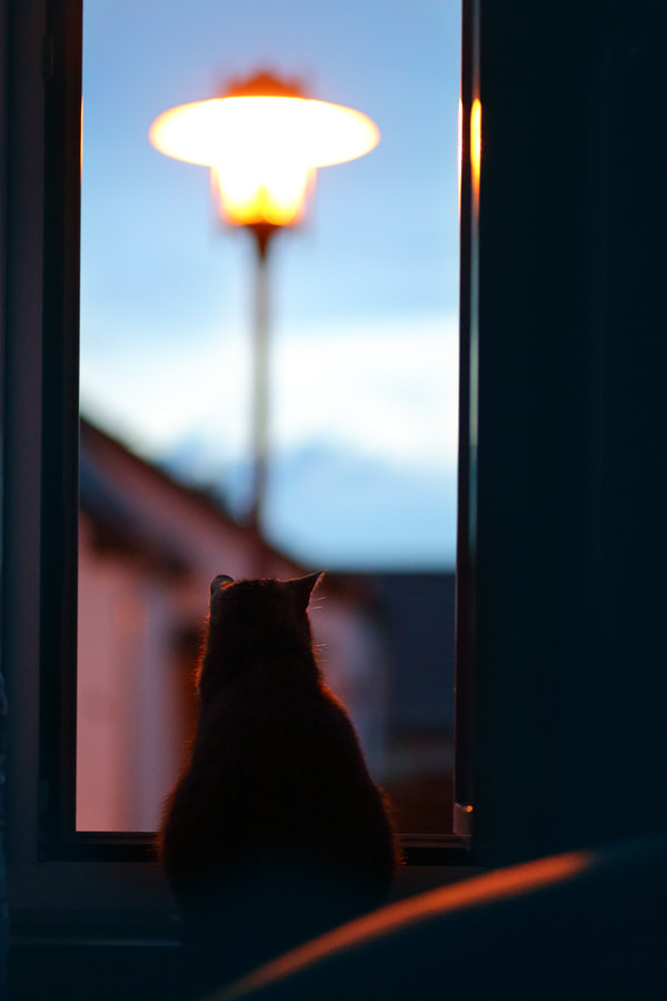 Photograph the one who watches by Dominic Schulz on 500px
