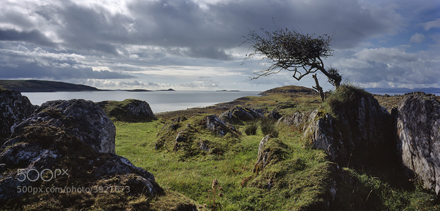 Hawthorn tree on coast of Sound of Jura and Locch na Cille Scotland