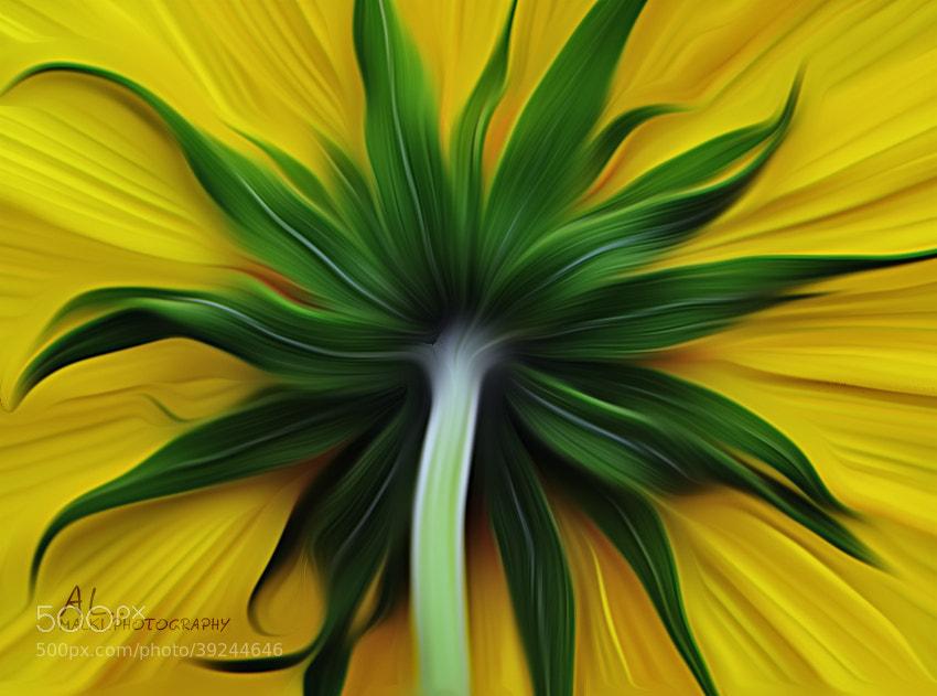 Photograph Beauty hiding by almalki abdullrahman on 500px
