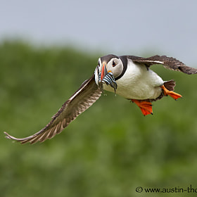 Taken this weekend on the Farne Islands.