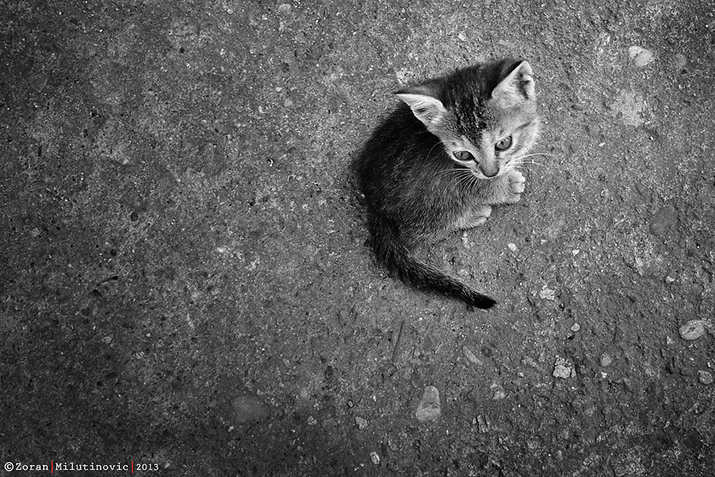 Photograph Kitty on the Moon?! by Zoran Milutinovic on 500px