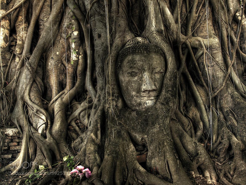 Photograph Buddha by Tashi_Delek Nakata on 500px