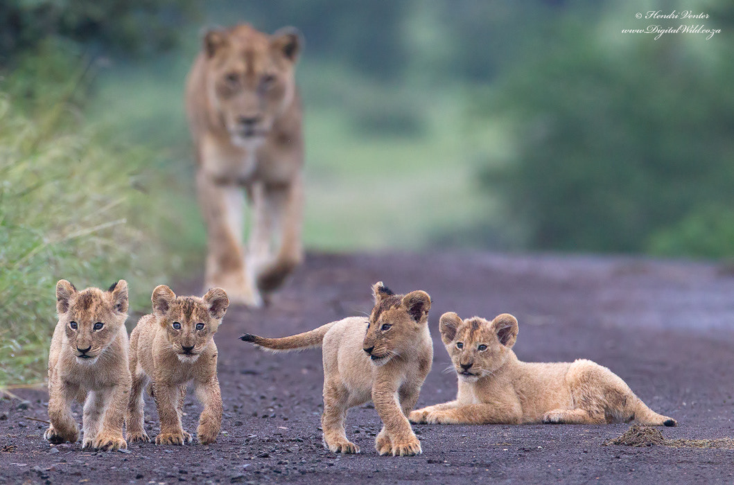 Photograph Future Leaders by Hendri Venter on 500px