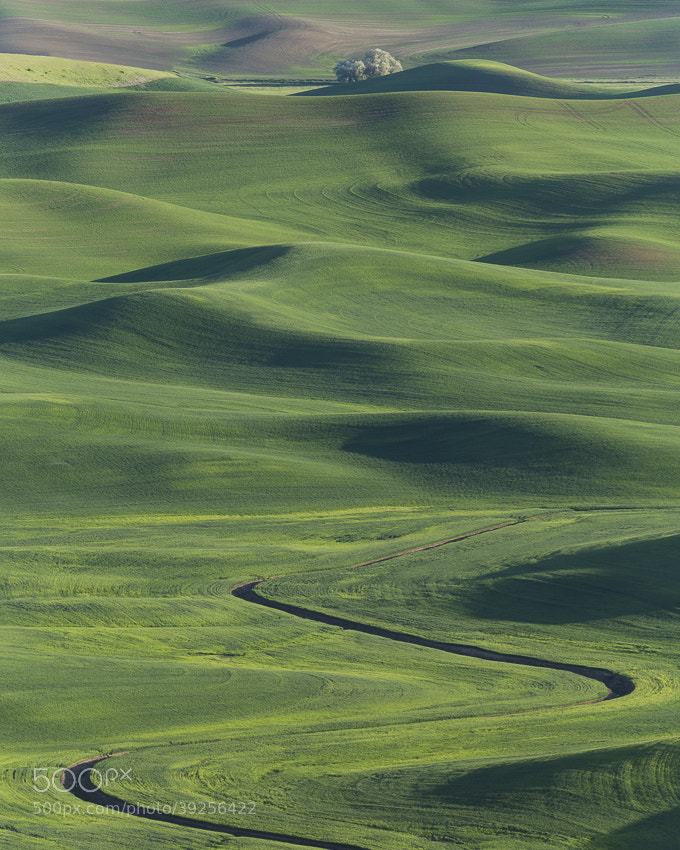 Photograph Palouse by Nicholas Hill on 500px