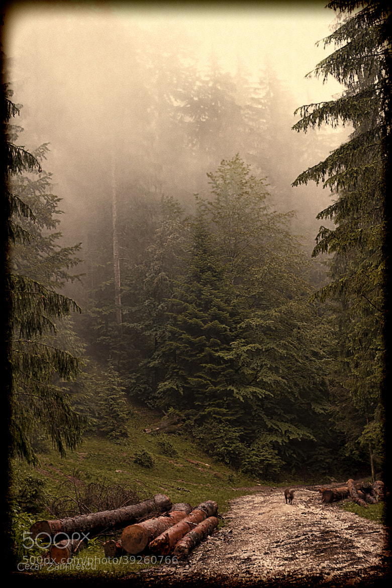 Photograph Old photo in the forest by Zanfirescu Grigoras Cezar on 500px