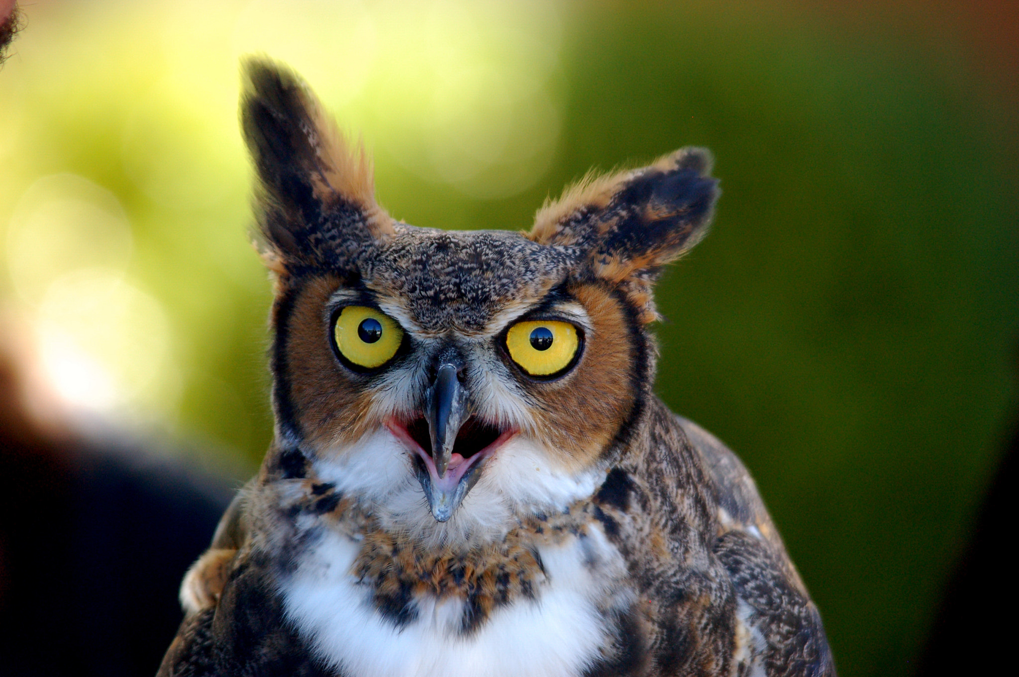 Photograph Great Horned Owl by Keith Collins on 500px