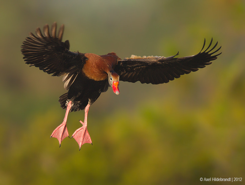 Photograph Landing Gear Down by Axel Hildebrandt on 500px