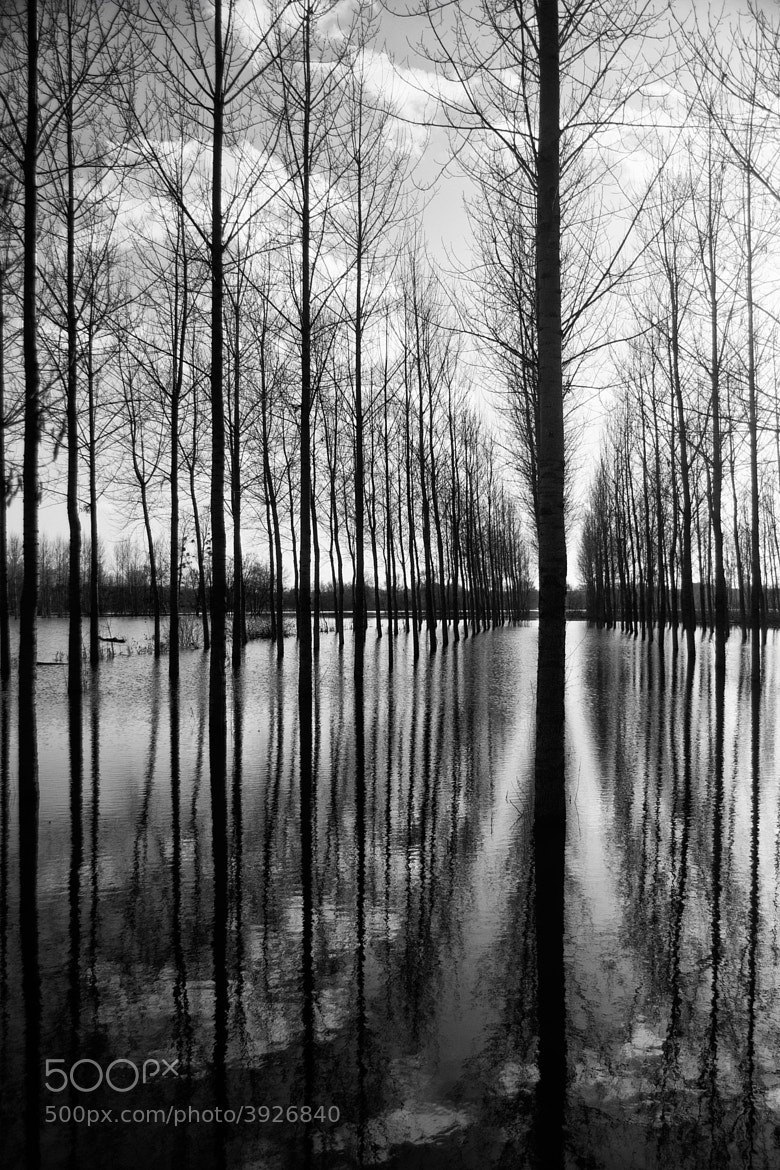 Photograph Trees in flood by Nadine Moynat on 500px