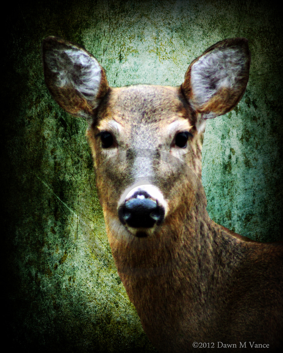Photograph Oh Deer by Dawn Vance on 500px