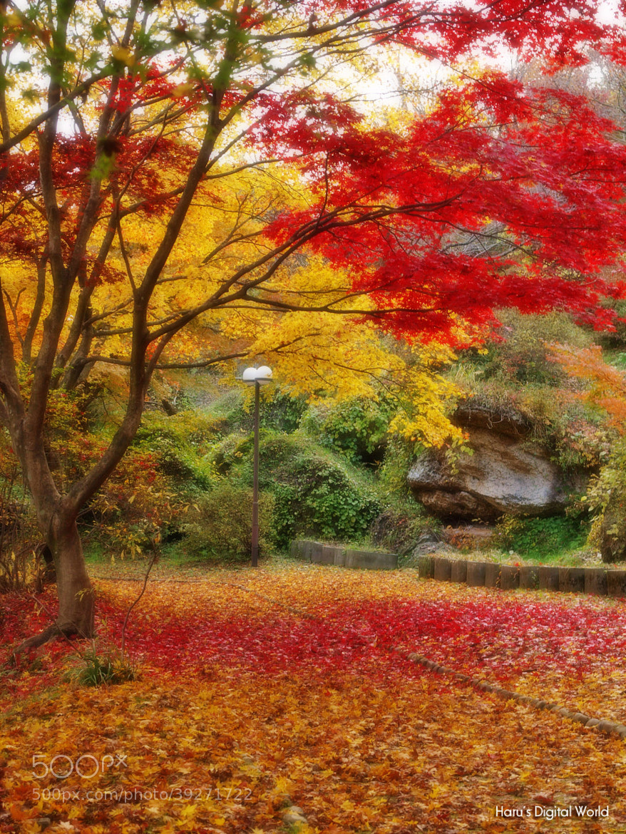 Photograph Autumn by Haru Digital phot on 500px