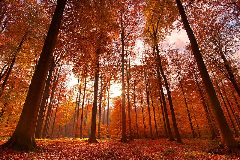 Photograph Autumn Splendor by Nicolas Deflandre on 500px