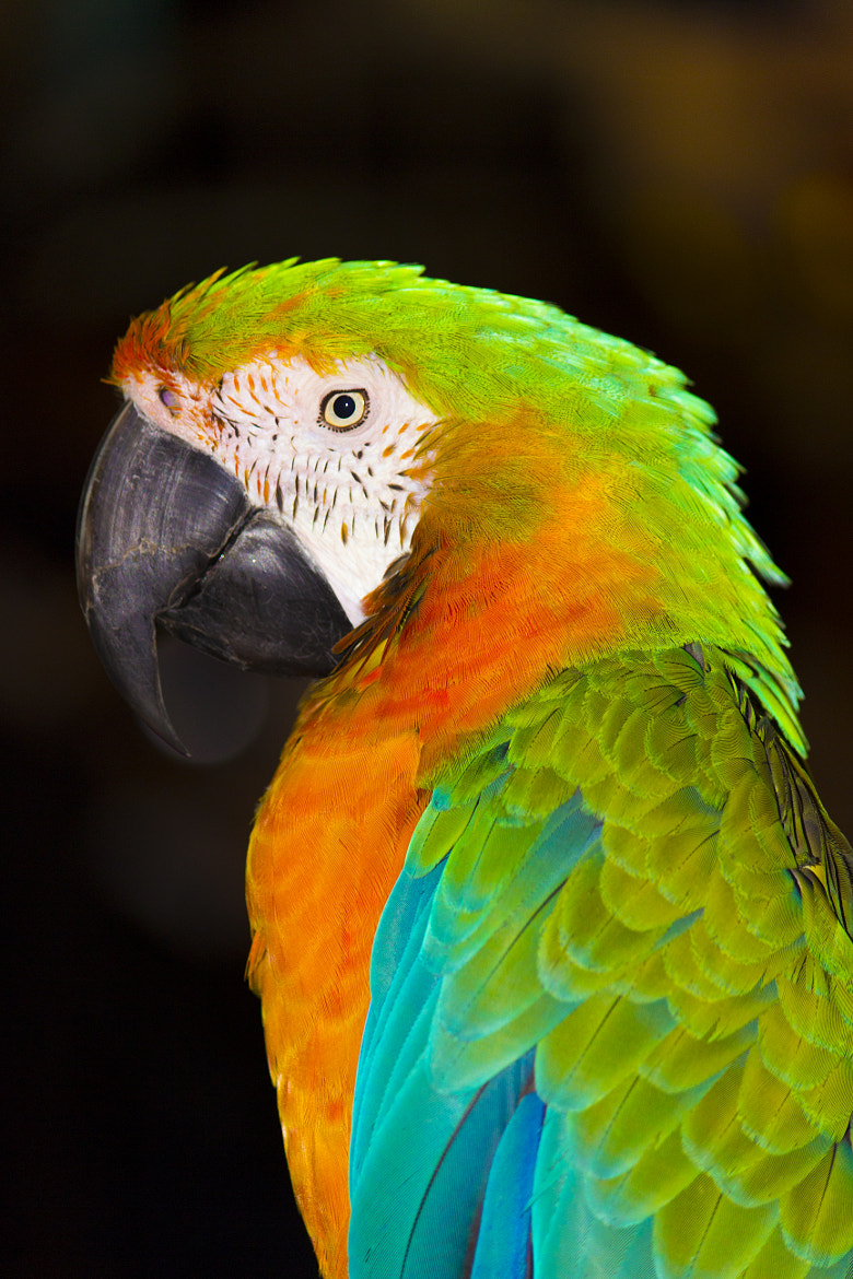 Photograph Parrot by John Velocci on 500px
