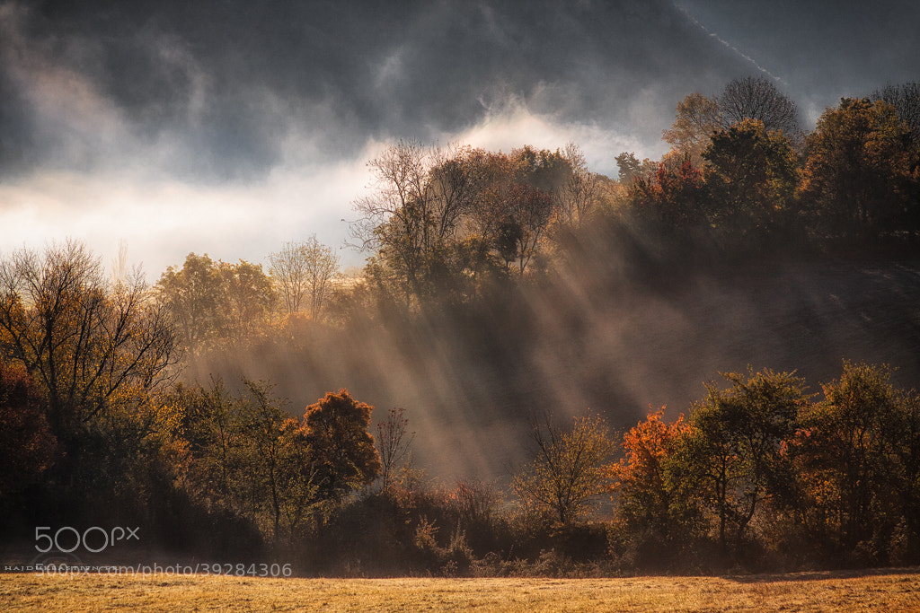 Photograph Whispers of autumn by Bastien HAJDUK on 500px