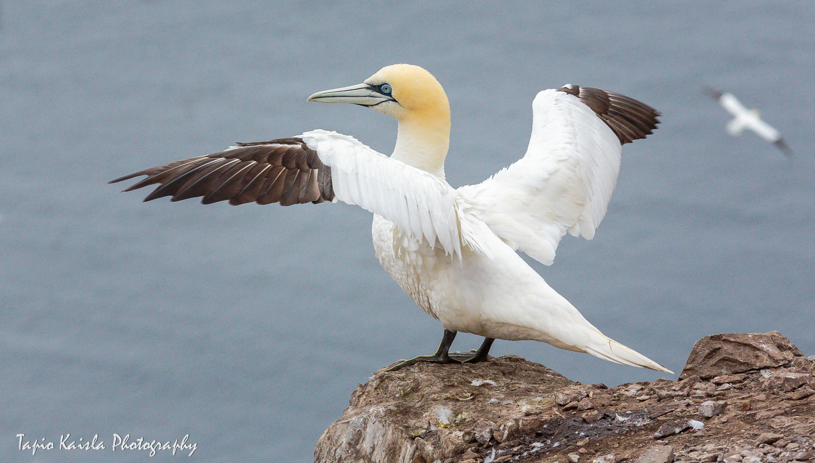 Photograph Stretching wings by Tapio Kaisla on 500px