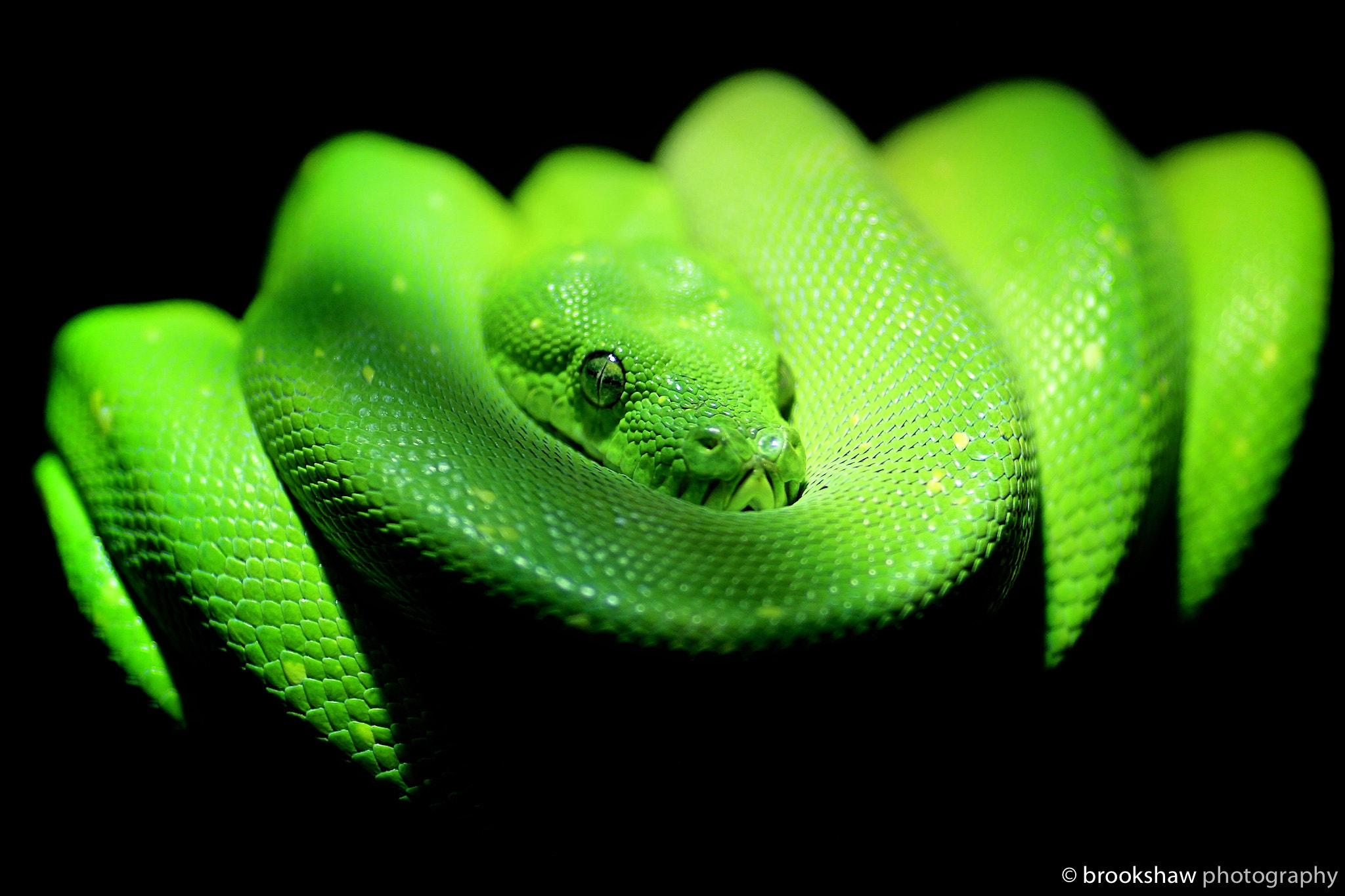 Photograph Green Python by Gary Brookshaw on 500px