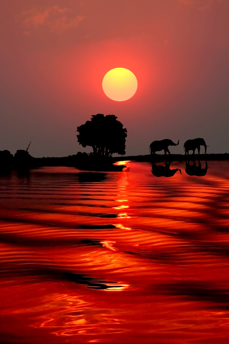 Photograph SUNSET WITH ELEPHANTS - BOTSWANA by Michael Sheridan on 500px