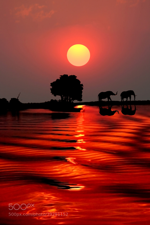 Photograph SUNSET WITH ELEPHANTS - BOTSWANA by Michael Sheridan on 500px