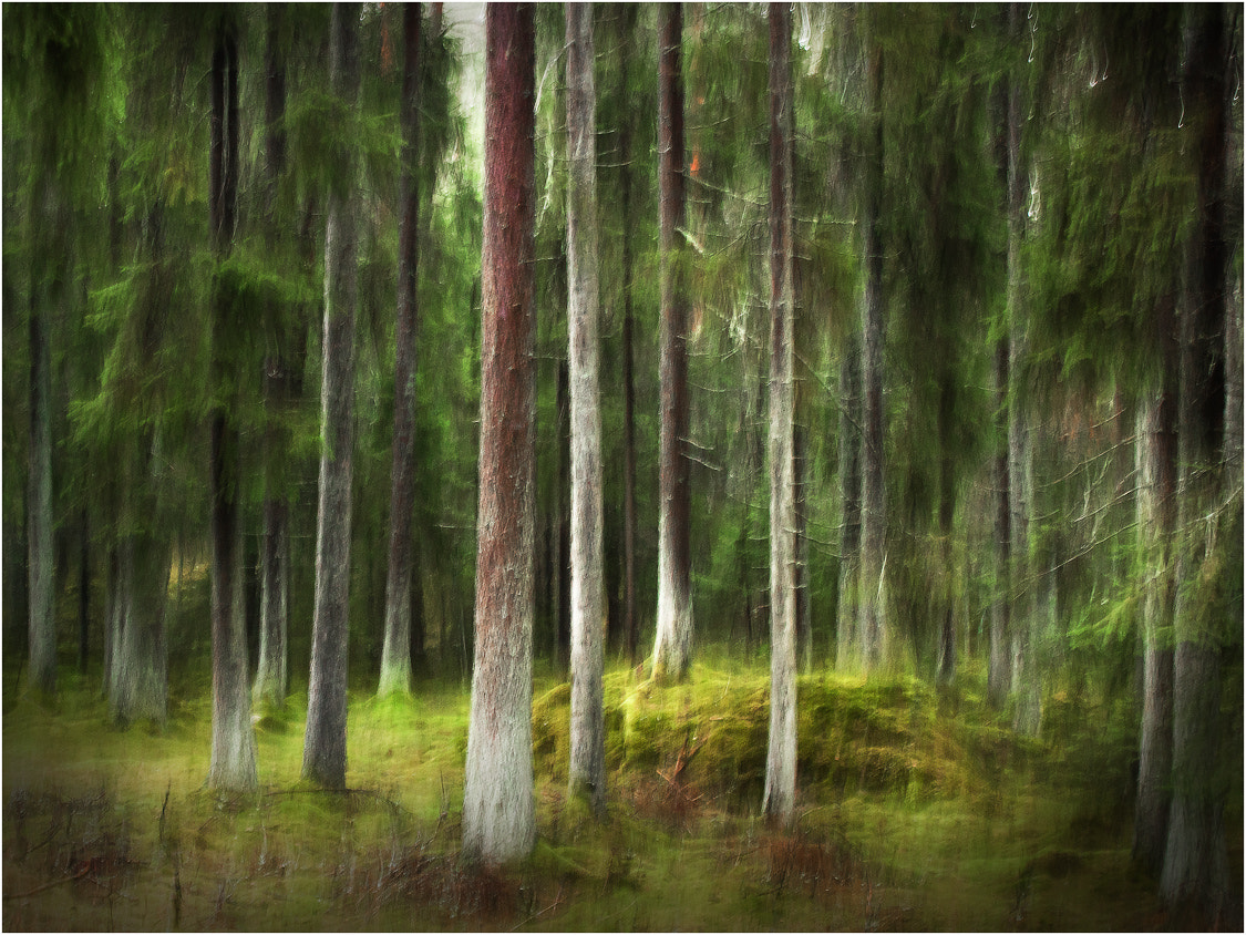 Photograph Forrest by Rikard  Olsson on 500px