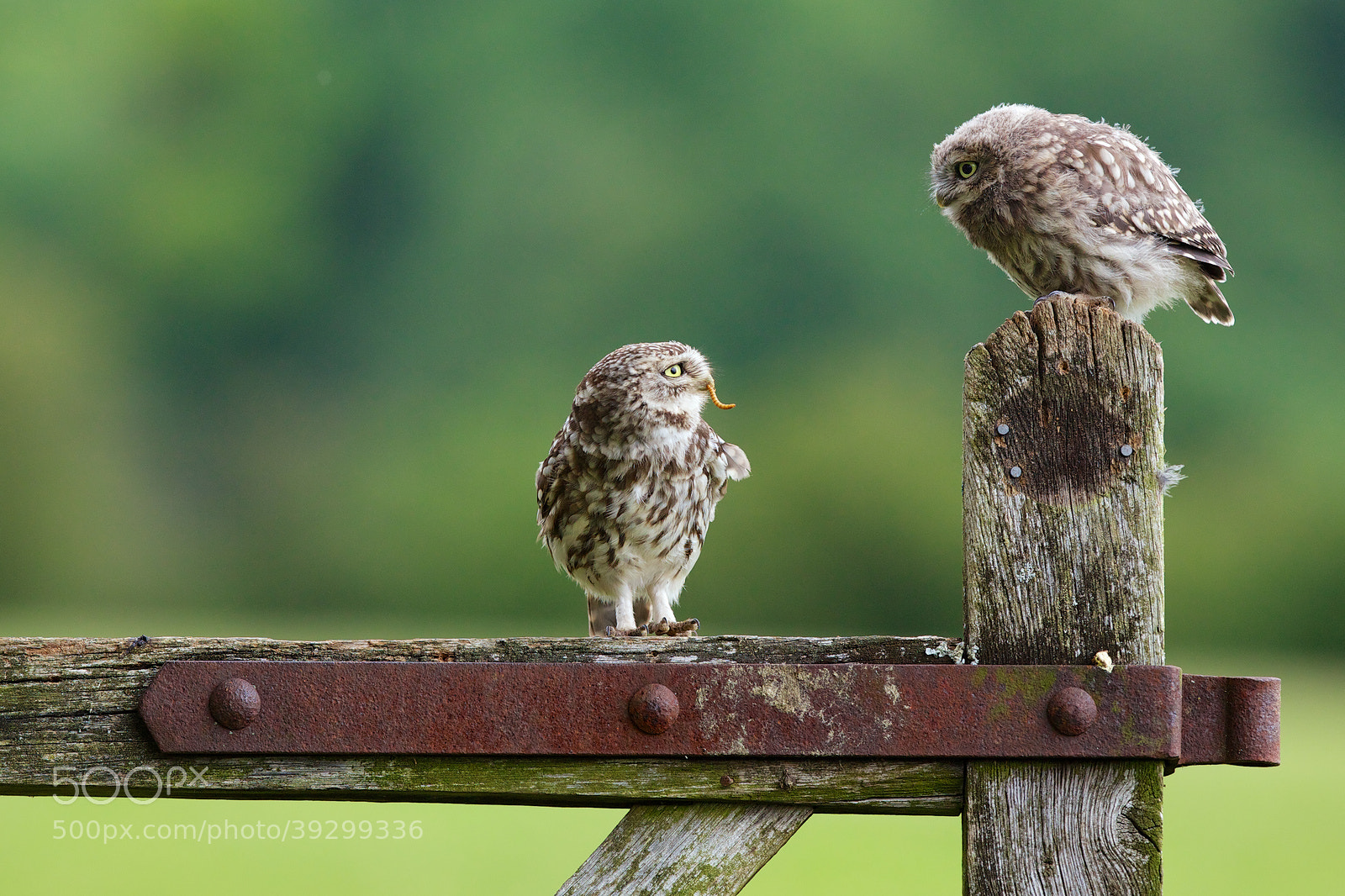 Photograph suppertime by Mark Bridger on 500px