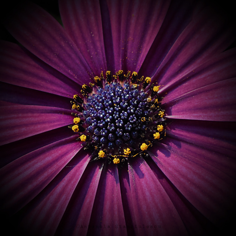 Photograph Violet mood by Anto Banto on 500px