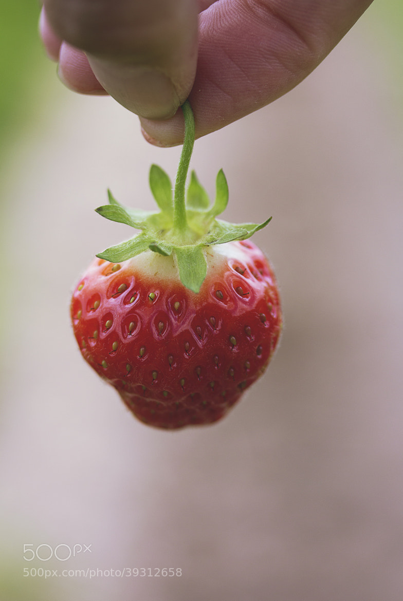 Photograph Strawberry by Gabriela Tulian on 500px