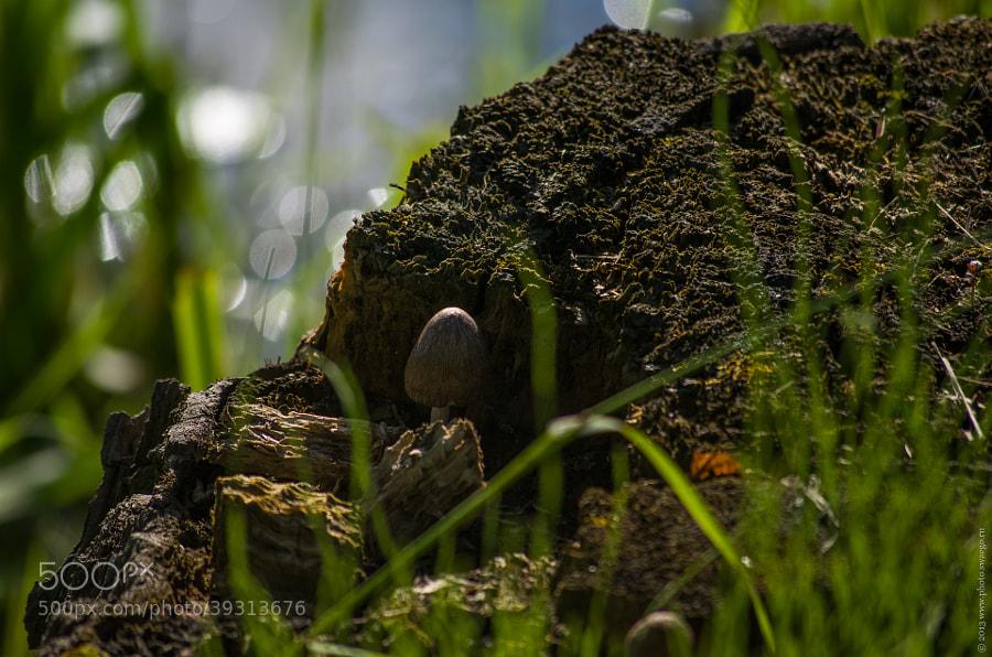 mushroom by Tolik Maltsev on 500px.com