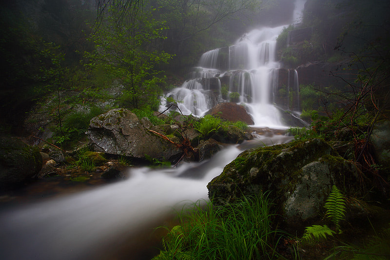 Photograph Forest´s heart by Juan Pavon on 500px