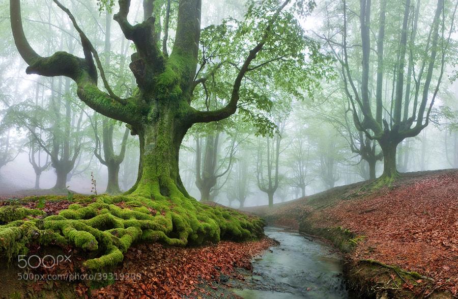 """Photograph """"The FOREST MARAVILLADOR II"""" / """"El BOSQUE MARAVILLADOR II"""" by Juan PIXELECTA on 500px"""