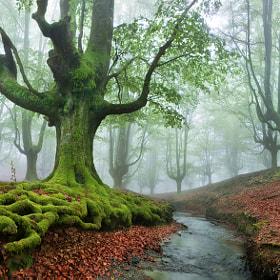 """""""The FOREST MARAVILLADOR II"""" / """"El BOSQUE MARAVILLADOR II"""" by Juan PIXELECTA on 500px.com"""