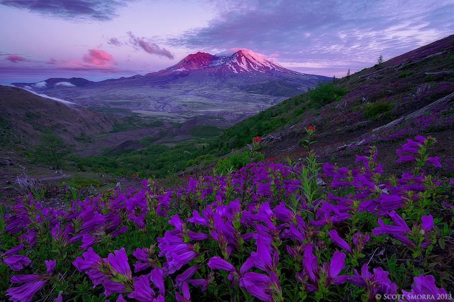 Photograph Awakening by Scott  Smorra on 500px