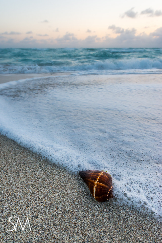 Photograph sea shell, miami, florida by Sudarshan Mondal on 500px