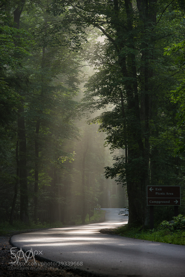 Photograph curved road, smoky mountain national park by Sudarshan Mondal on 500px