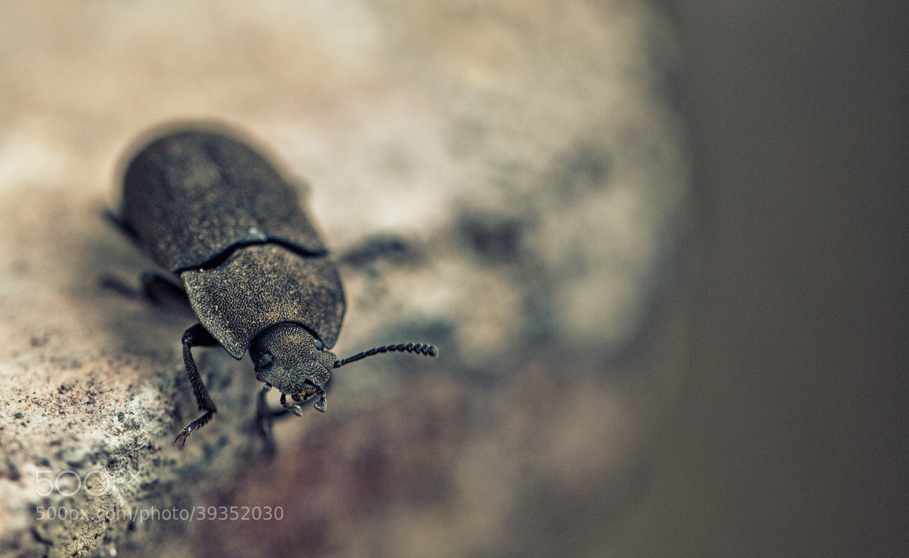 Photograph Beetle by Dilip Singh on 500px