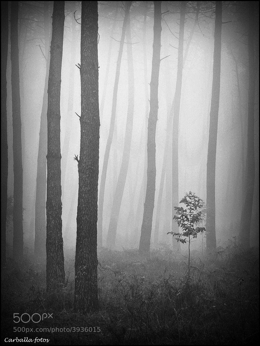 Photograph Deep  forest by Guillermo  Carballa on 500px